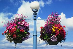 cesti di fiori a Victoria