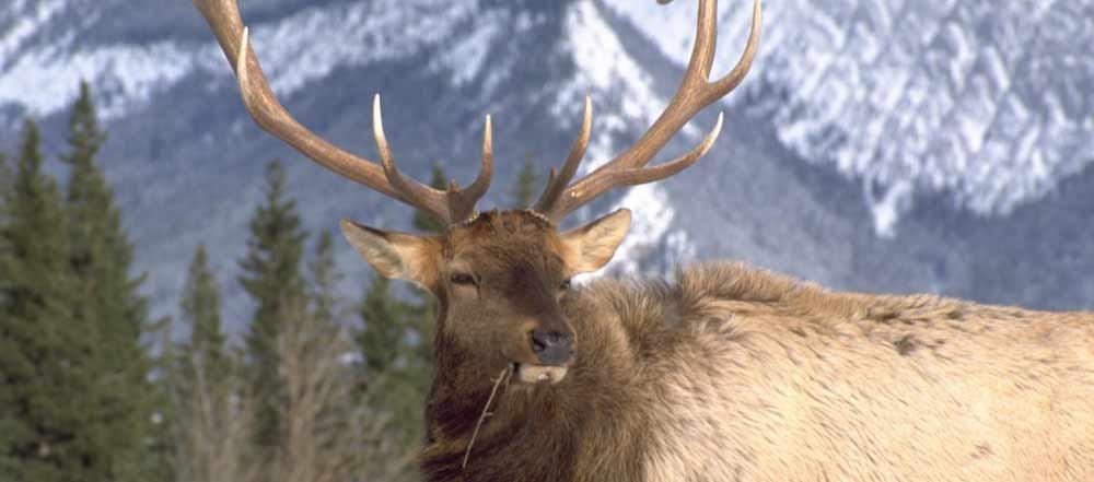 fauna-British-Columbia
