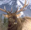 fauna British Columbia 127x126 - British Columbia: i Parchi del Nord