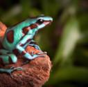 fauna Costa Rica 127x126 - Costa Rica: quanto costa vivere in paradiso?
