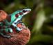 fauna-Costa-Rica
