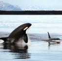 glacierbay 127x126 - Alaska, tour al Glacier Bay National Park & Preserve
