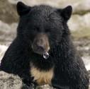 orso e pesca in Alaska 127x126 - Sport in Alaska: trekking e pesca sull'isola di Kodiak