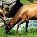 parchi tra Usa e Canada 127x126 - I Parchi delle Rockies e Yellowstone: tour tra Canada e Usa