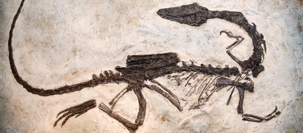 parco-provinciale-dei-dinosauri-west-canada