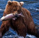 pesca al salmone British Columbia 127x126 - Ad Anchorage, in Alaska, per la stagione dei salmoni