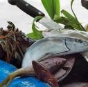pesca sportiva in Costa Rica 127x126 - La pesca sportiva in Costa Rica