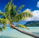 polinesia1 127x126 - Viaggi di nozze 2022: tour tra Canada, British Columbia e Polinesia Francese