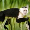 scimmietta fauna Costa Rica 127x126 - Tour avventura in Costa Rica: cosa portare e come vestirsi