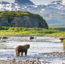 Alaska grizzly 127x126 - Alaska Highway: viaggi in famiglia per scoprire l'autostrada più grande