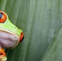 rana pigmea 127x126 - In Costa Rica, sul set del film Jurassic Park