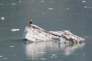 regione di Wrangell Kluane