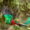 Queztlal Bird Costa Rica