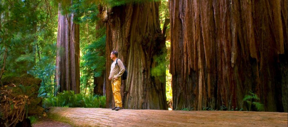 Alberi di Sequoia nel Sequoia National Park