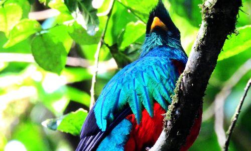 MERAVIGLIOSA COSTA RICA