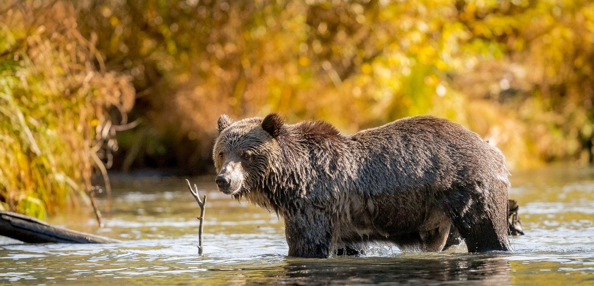KB 2015 Fall Water Bear DSC00421 1 1 - Viaggio in Canada