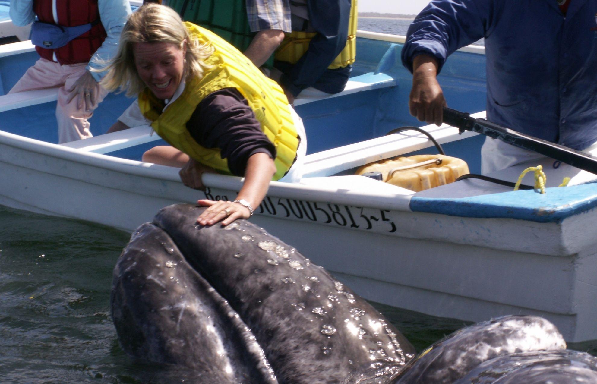 04 whale caress 1 - Baja California. Quando andare per vedere le balene?