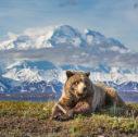 alaszka fokep ii 127x126 - Viaggiare alla scoperta della natura incontaminata dell'Alaska
