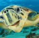 2 turtle 127x126 - Viaggio in Costarica - Selfdrive - 11 giorni