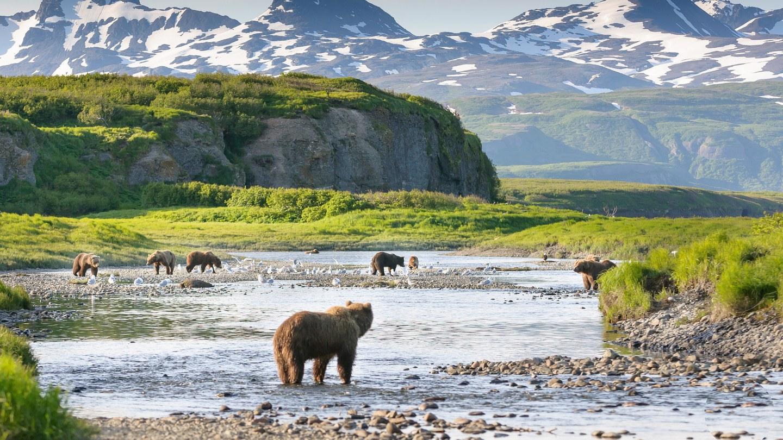 Alaska grizzly - Gli orsi dell'Alaska: abitudini e curiosità